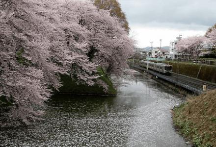 Tàu JR phía bắc Nhật Bản sẽ giảm tốc độ tại điểm ngắm hoa anh đào khu vực Yamagata